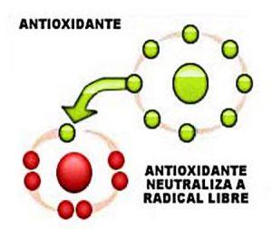 Función de un antioxidante