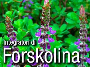 Planta desde la que se obtiene la forskolina