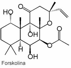 molécula de forskolina